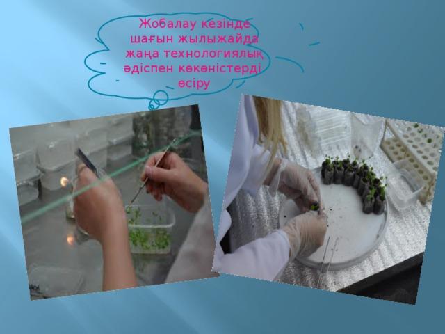 Жобалау кезінде шағын жылыжайда жаңа технологиялық әдіспен көкөністерді өсіру