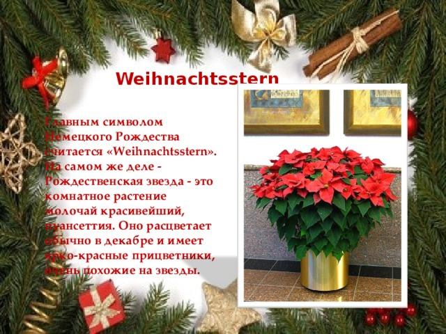 Weihnachtsstern Главным символом Немецкого Рождества считается «Weihnachtsstern». На самом же деле - Рождественская звезда - это комнатное растение молочай красивейший, пуансеттия. Оно расцветает обычно в декабре и имеет ярко-красные прицветники, очень похожие на звезды.