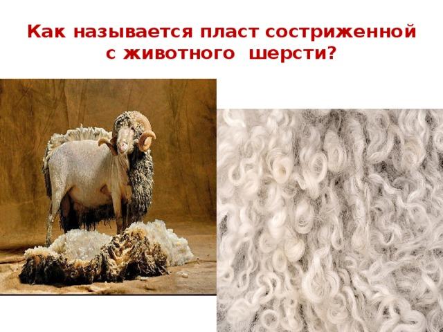 Как называется пласт состриженной с животного шерсти?