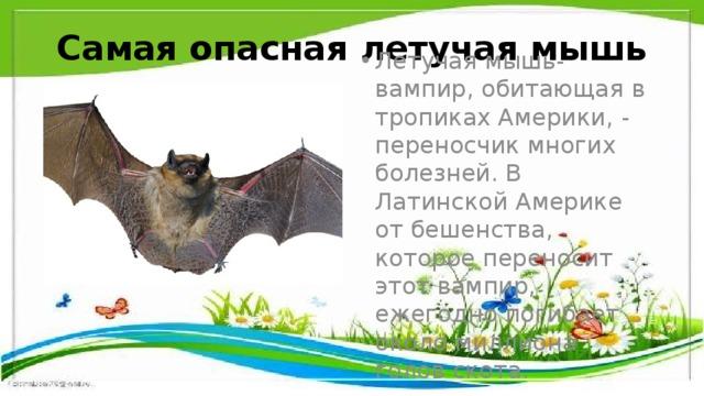 Самая опасная летучая мышь