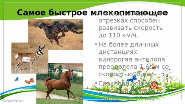 Самое быстрое млекопитающее