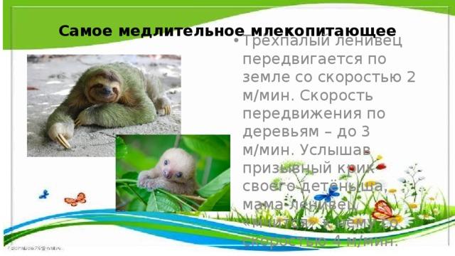 Самое медлительное млекопитающее