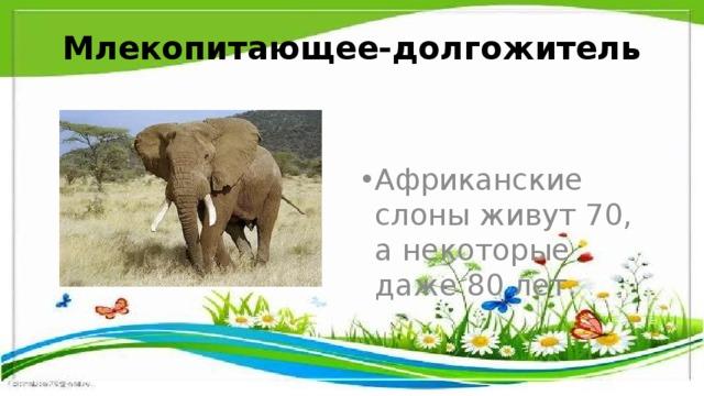 Млекопитающее-долгожитель