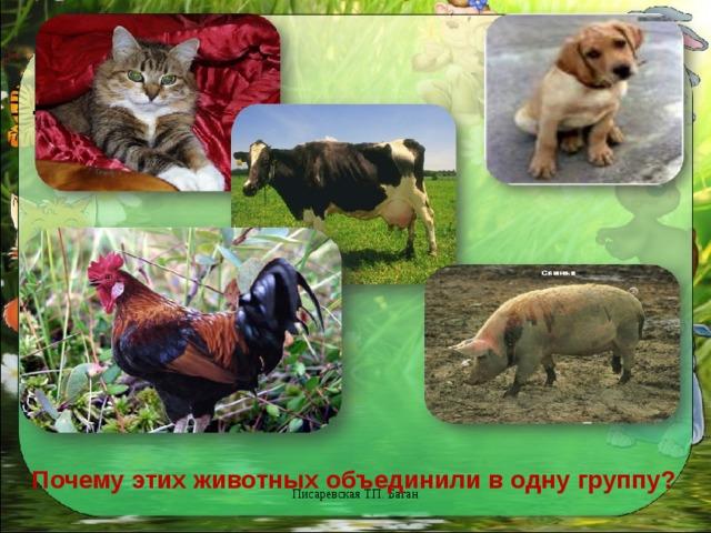 .    Почему этих животных объединили в одну группу? Писаревская Т.П. Баган