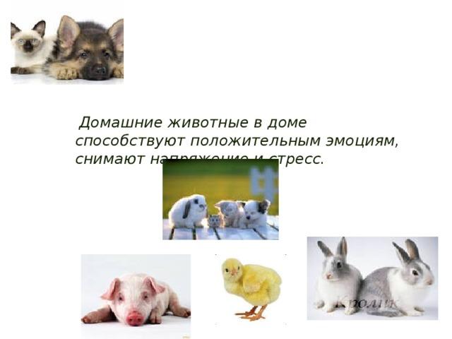 Домашние животные в доме способствуют положительным эмоциям, снимают напряжение и стресс.