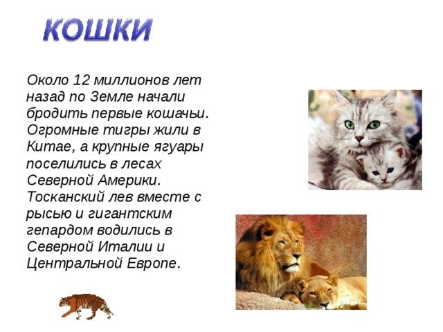 Около 12 миллионов лет назад по Земле начали бродить первые кошачьи. Огромные тигры жили в Китае, а крупные ягуары поселились в лесах Северной Америки. Тосканский лев вместе с рысью и гигантским гепардом водились в Северной Италии и Центральной Европе.