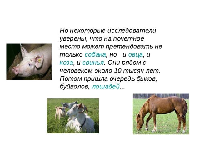 Но некоторые исследователи уверены, что на почетное место может претендовать не только собака , но и овца , и коза , и свинья . Они рядом с человеком около 10 тысяч лет. Потом пришла очередь быков, буйволов, лошадей ...