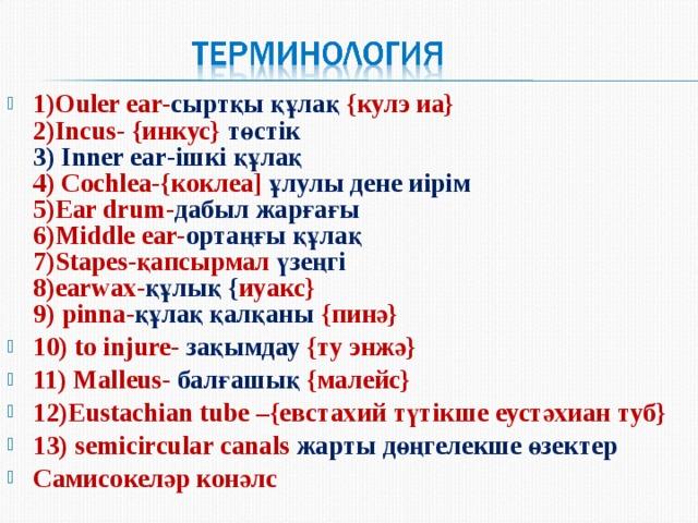 1)Ouler ear- сыртқы құлақ  { кулэ иа }  2)Incus-  { инкус }  төстік  3) Inner ear -ішкі құлақ  4) Cochlea-{ коклеа ]  ұлулы дене иірім  5)Ear drum- дабыл жарғағы  6)Middle ear- ортаңғы құлақ  7)Stapes- қапсырмал үзеңгі  8)earwax- құлық { иуакс }   9 )  pinna- құлақ қалқаны { пинә }  10 ) to injure-  зақымдау  { ту энжә } 11 ) Malleus- балғашық { малейс } 12 ) Eustachian tube – { евстахий түтікше  еустәхиан туб } 13) semicircular canals жарты дөңгелекше өзектер Самисокеләр конәлс