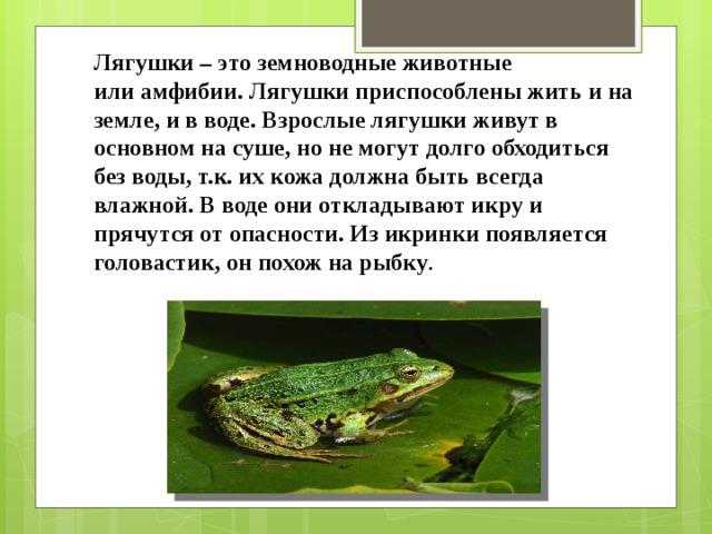 Лягушки– этоземноводныеживотные илиамфибии.Лягушки приспособлены жить и на земле, и в воде. Взрослые лягушки живут в основном на суше, но не могут долго обходиться без воды, т.к. их кожа должна быть всегда влажной. В воде они откладывают икру и прячутся от опасности. Из икринки появляется головастик, он похож на рыбку .