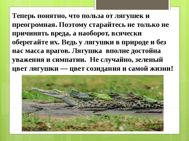 Теперь понятно, что польза от лягушек и преогромная. Поэтому старайтесь не только не причинять вреда, а наоборот, всячески оберегайте их. Ведь у лягушки в природе и без нас масса врагов. Лягушка вполне достойна уважения и симпатии. Не случайно, зеленый цвет лягушки — цвет созидания и самой жизни!  БЕРЕГИТЕ ЛЯГУШЕК!