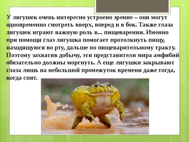 У лягушек очень интересно устроено зрение – они могут одновременно смотреть вверх, вперед и в бок. Также глаза лягушек играют важную роль в... пищеварении. Именно при помощи глаз лягушка помогает протолкнуть пищу, находящуюся во рту, дальше по пищеварительному тракту. Поэтому захватив добычу, эти представители мира амфибий обязательно должны моргнуть. А еще лягушки закрывают глаза лишь на небольшой промежуток времени даже тогда, когда спят.
