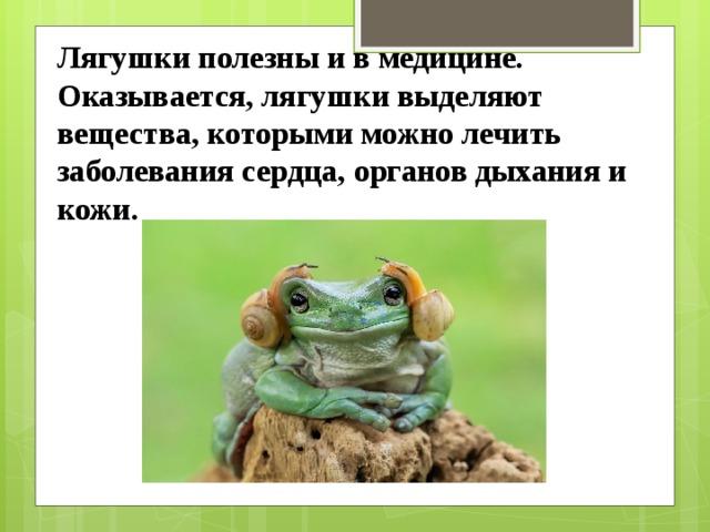 Лягушки полезны и в медицине. Оказывается, лягушки выделяют вещества, которыми можно лечить заболевания сердца, органов дыхания и кожи.