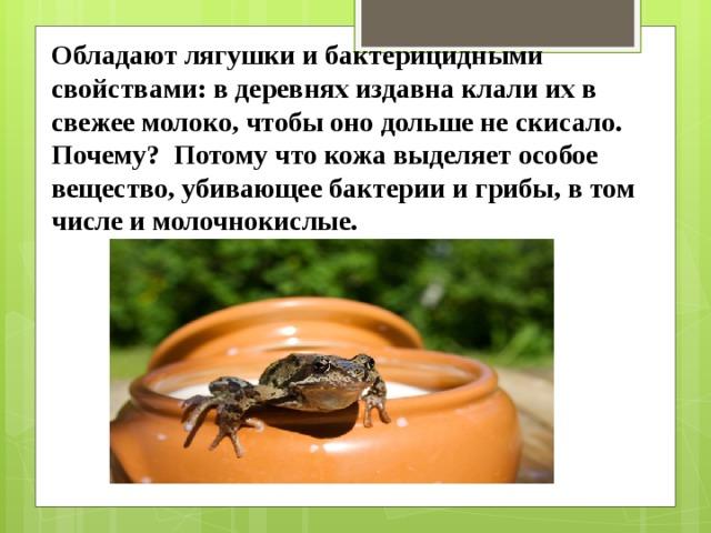 Обладают лягушки и бактерицидными свойствами: в деревнях издавна клали их в свежее молоко, чтобы оно дольше не скисало. Почему? Потому что кожа выделяет особое вещество, убивающее бактерии и грибы, в том числе и молочнокислые.