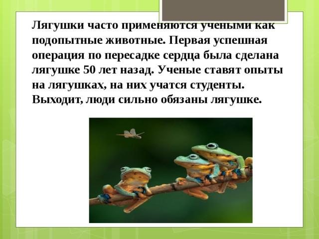 Лягушки часто применяются учеными как подопытные животные. Первая успешная операция по пересадке сердца была сделана лягушке 50 лет назад. Ученые ставят опыты на лягушках, на них учатся студенты. Выходит, люди сильно обязаны лягушке.