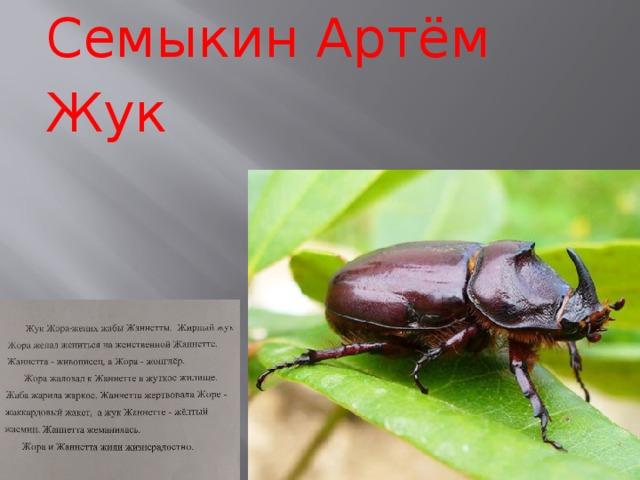 Семыкин Артём Жук
