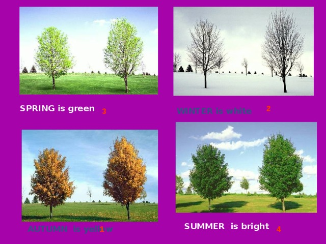 2 SPRING is green  WINTER is white  3 SUMMER is bright   AUTUMN is yellow  1 4