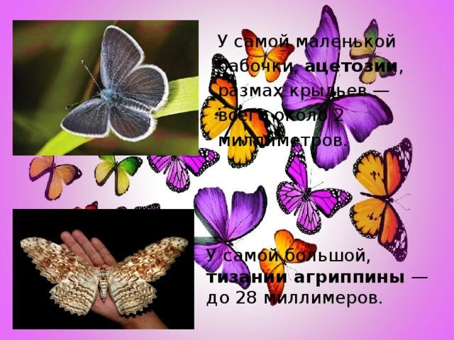 У самой маленькой бабочки, ацетозии , размах крыльев — всего около 2 миллиметров. У самой большой, тизании агриппины — до 28 миллимеров.