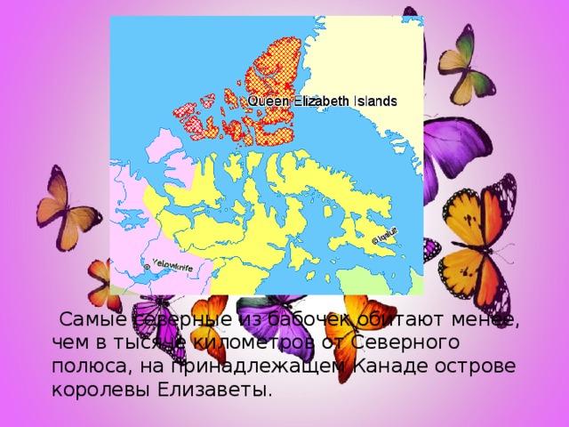Самые северные из бабочек обитают менее, чем в тысяче километров от Северного полюса, на принадлежащем Канаде острове королевы Елизаветы.