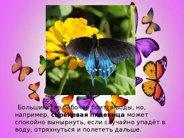 Большинство бабочек боится воды, но, например, сиреневая пяденица может спокойно вынырнуть, если случайно упадёт в воду, отряхнуться и полететь дальше.