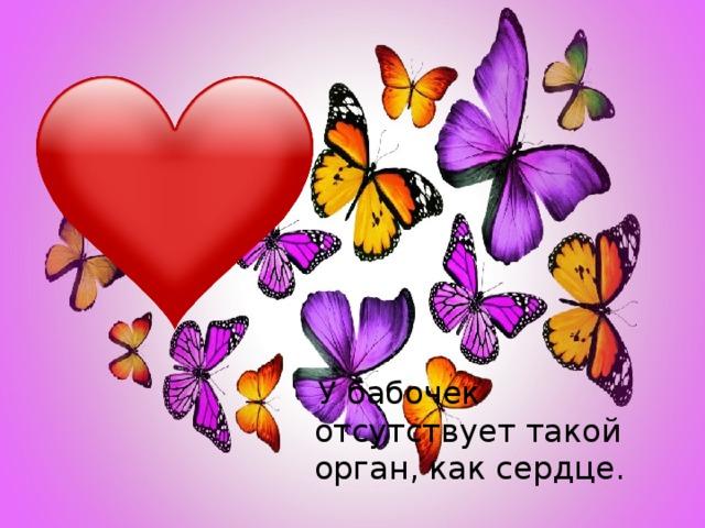 У бабочек отсутствует такой орган, как сердце.