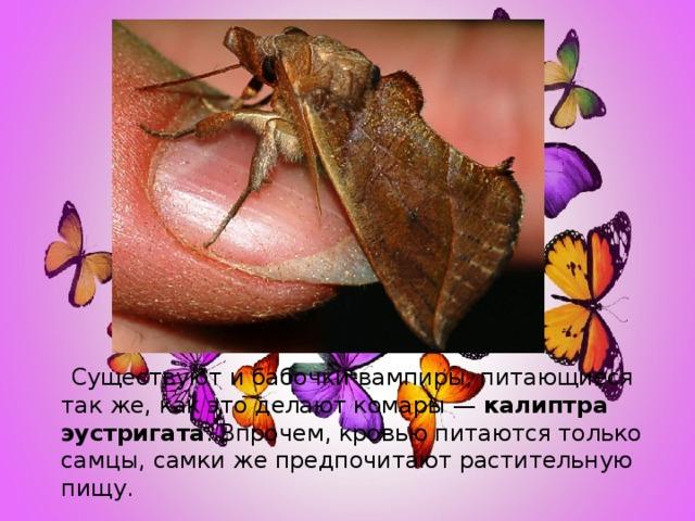 Существуют и бабочки-вампиры, питающиеся так же, как это делают комары — калиптра эустригата . Впрочем, кровью питаются только самцы, самки же предпочитают растительную пищу.