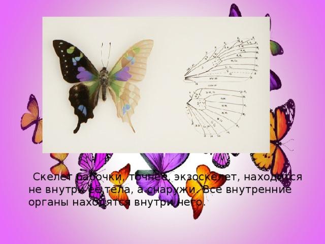 Скелет бабочки, точнее, экзоскелет, находится не внутри её тела, а снаружи. Все внутренние органы находятся внутри него.