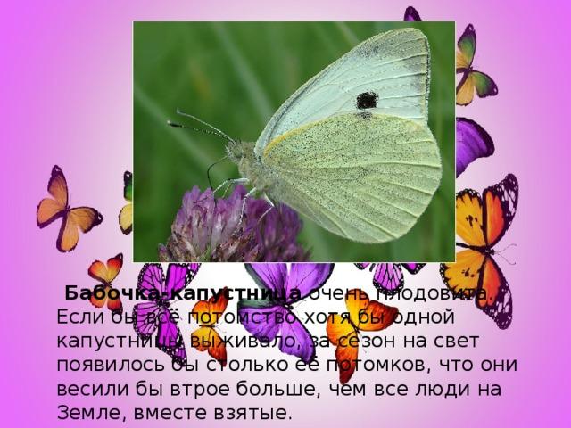 Бабочка-капустница очень плодовита. Если бы всё потомство хотя бы одной капустницы выживало, за сезон на свет появилось бы столько её потомков, что они весили бы втрое больше, чем все люди на Земле, вместе взятые.