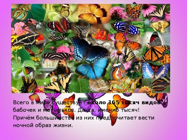 Всего в мире существует около 165 тысяч видов бабочек и мотыльков. Да-да, именно тысяч! Причём большинство из них предпочитает вести ночной образ жизни.