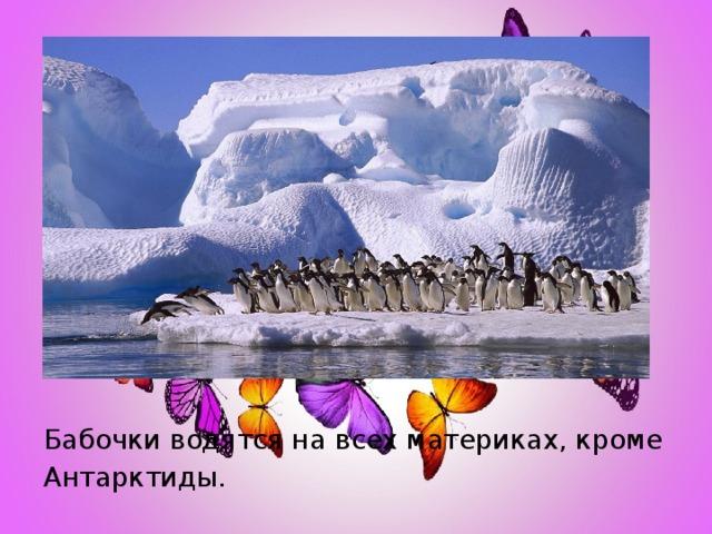 Бабочки водятся на всех материках, кроме Антарктиды.