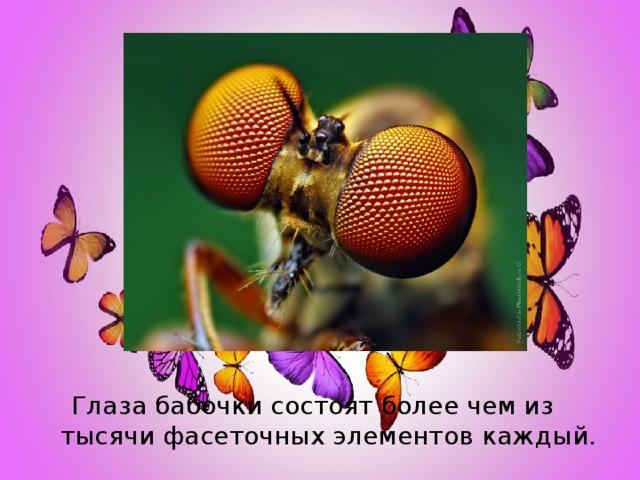 Глаза бабочки состоят более чем из тысячи фасеточных элементов каждый.