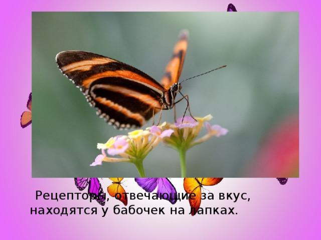 Рецепторы, отвечающие за вкус, находятся у бабочек на лапках.