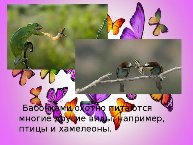 Бабочками охотно питаются многие другие виды, например, птицы и хамелеоны.