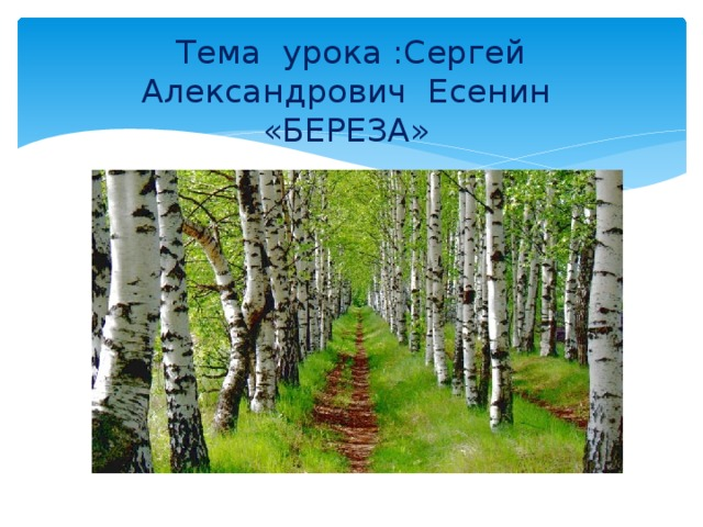 Тема урока :Сергей  Александрович Есенин  «БЕРЕЗА»