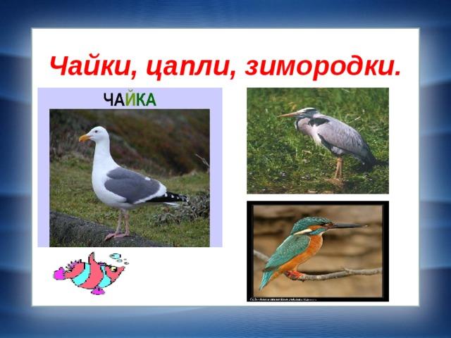Чайки, цапли, зимородки.