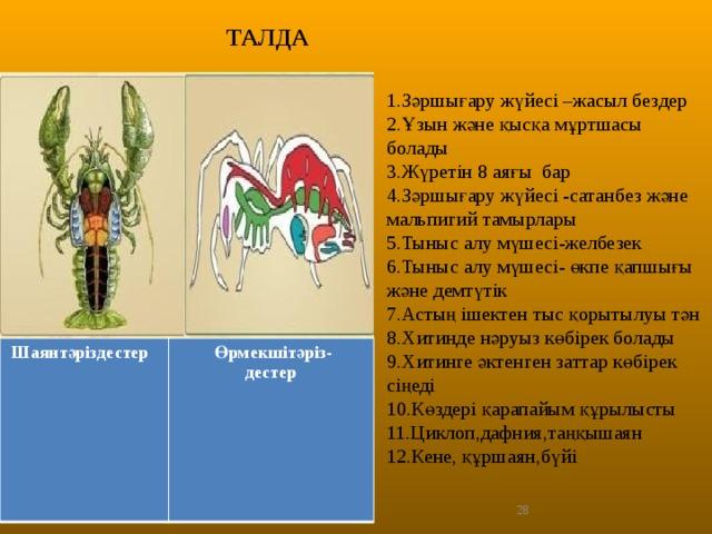 ТАЛДА 1.Зәршығару жүйесі –жасыл бездер 2.Ұзын және қысқа мұртшасы болады 3.Жүретін 8 аяғы бар 4.Зәршығару жүйесі -сатанбез және мальпигий тамырлары 5.Тыныс алу мүшесі-желбезек 6.Тыныс алу мүшесі- өкпе қапшығы және демтүтік 7.Астың ішектен тыс қорытылуы тән 8.Хитинде нәруыз көбірек болады 9.Хитинге әктенген заттар көбірек сіңеді 10.Көздері қарапайым құрылысты 11.Циклоп,дафния,таңқышаян 12.Кене, құршаян,бүйі Шаянтәріздестер  Өрмекшітәріз- дестер