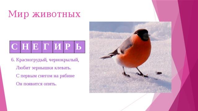 Мир животных С Н Е Г И Р Ь 6. Красногрудый, чернокрылый,  Любит зернышки клевать.  С первым снегом на рябине  Он появится опять.