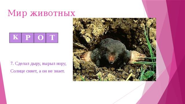 Мир животных  К  Р  О  Т 7. Сделал дыру, вырыл нору, Солнце сияет, а он не знает.
