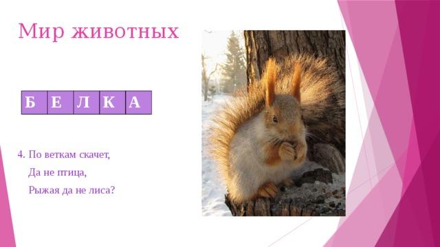 Мир животных Б Е Л К А 4. По веткам скачет,  Да не птица,  Рыжая да не лиса?