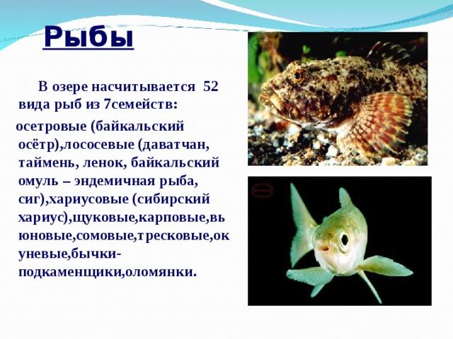 Рыбы  В озере насчитывается 52 вида рыб из 7семейств:  осетровые (байкальский осётр),лососевые (даватчан, таймень, ленок, байкальский омуль – эндемичная рыба, сиг),хариусовые (сибирский хариус),щуковые,карповые,вьюновые,сомовые,тресковые,окуневые,бычки-подкаменщики,оломянки.