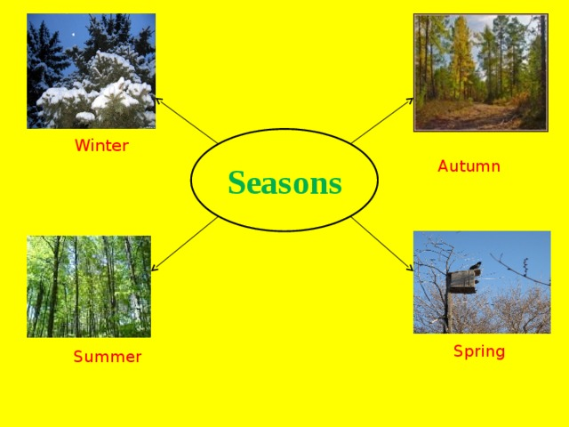 Seasons  Winter  Autumn  Spring  Summer