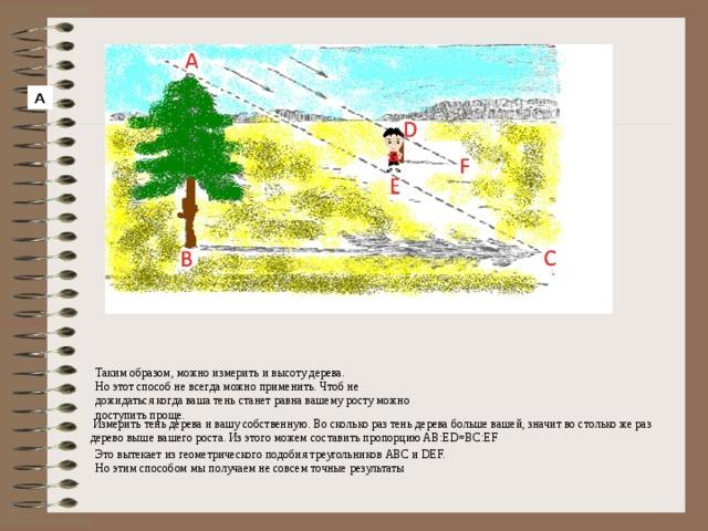 А Таким образом, можно измерить и высоту дерева. Но этот способ не всегда можно применить. Чтоб не дожидаться когда ваша тень станет равна вашему росту можно поступить проще.  Измерить тень дерева и вашу собственную. Во сколько раз тень дерева больше вашей, значит во столько же раз дерево выше вашего роста. Из этого можем составить пропорцию AB:ED=BC:EF Это вытекает из геометрического подобия треугольников АВС и DEF. Но этим способом мы получаем не совсем точные результаты