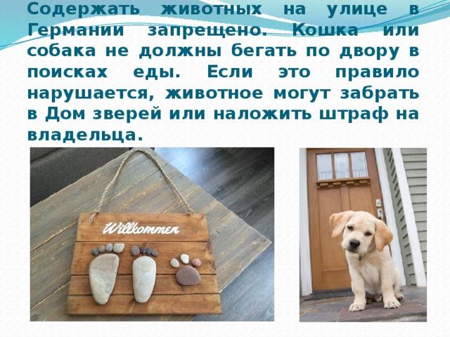 Содержать животных на улице в Германии запрещено. Кошка или собака не должны бегать по двору в поисках еды. Если это правило нарушается, животное могут забрать в Дом зверей или наложить штраф на владельца.