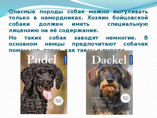 Опасные породы собак можно выгуливать только в намордниках. Хозяин бойцовской собаки должен иметь специальную лицензию на её содержание. Но таких собак заводят немногие. В основном немцы предпочитают собачек поменьше, таких, как таксы и пудели.
