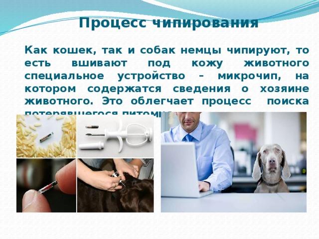 Процесс чипирования Как кошек, так и собак немцы чипируют, то есть вшивают под кожу животного специальное устройство – микрочип, на котором содержатся сведения о хозяине животного. Это облегчает процесс поиска потерявшегося питомца.