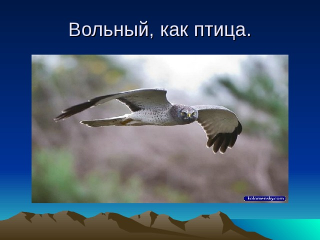 Вольный, как птица.