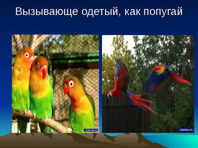 Вызывающе одетый, как попугай