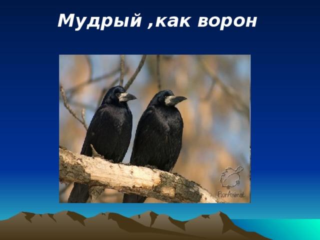 Мудрый ,как ворон