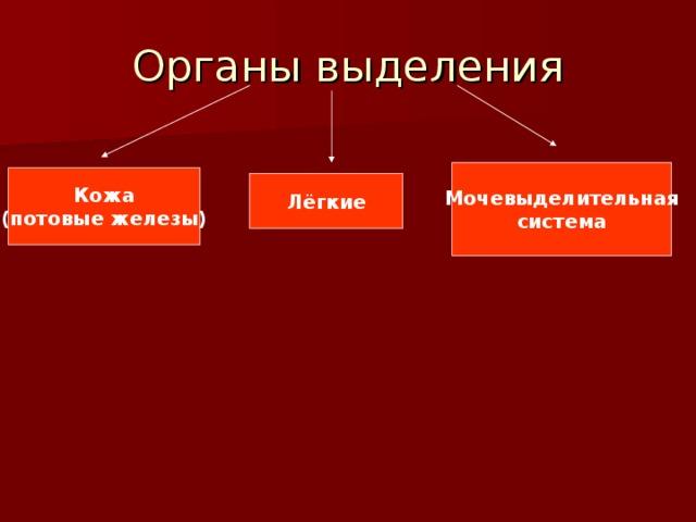 Органы выделения Мочевыделительная система Кожа (потовые железы) Лёгкие