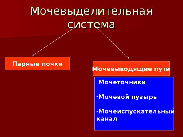 Мочевыделительная система Парные почки Мочевыводящие пути Мочеточники  Мочевой пузырь  Мочеиспускательный канал