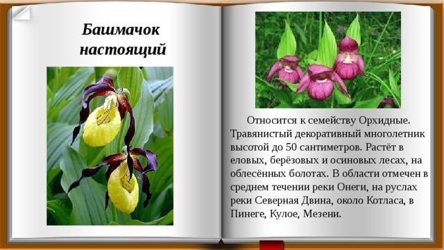 растения красной книги архангельской области фото имеет побочных эффектов